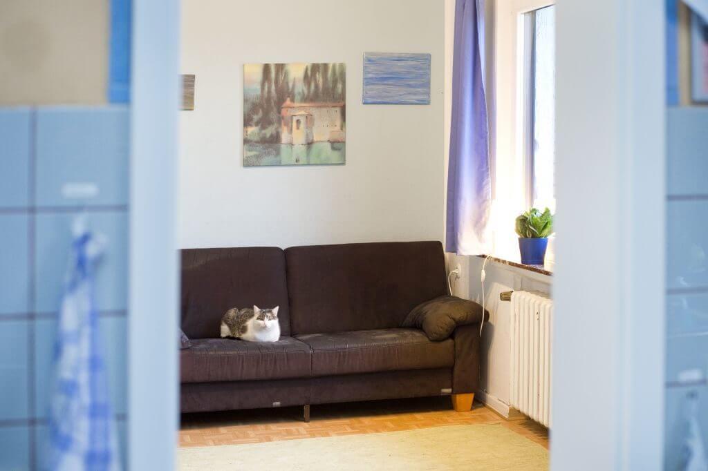 Detailaufnahme einer Katze auf einem Sofa