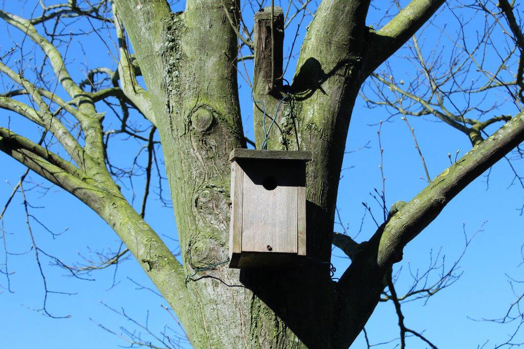 Ein Nistkasten im Baum